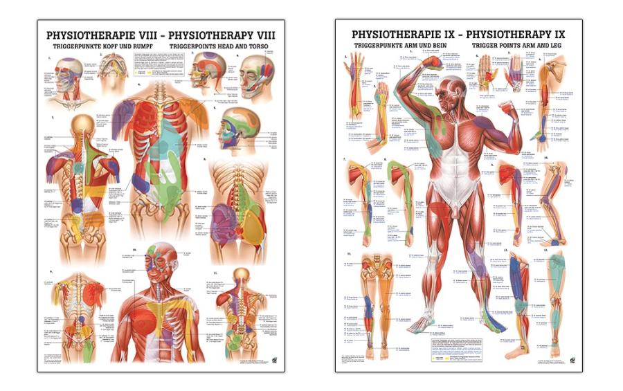 Centro de estimulación, análisis y restauración corporal: noticias